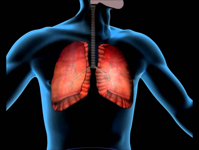 Respiração: o que se passa dentro do nosso corpo?